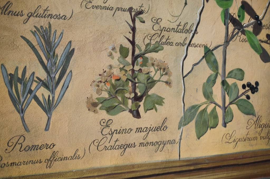 sr-moman-mural-plantas-detalle-2